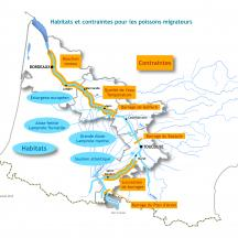 Carte migrateurs - Habitat contrainte